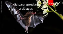 Murcielago blog