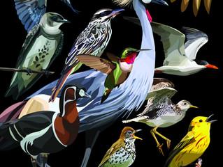 ¡Canta, vuela, elévate como las aves!