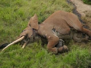 Triste Día Mundial de la Naturaleza