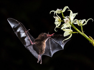 Un día para apreciar a los murciélagos