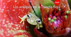 Blog Ranas