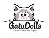 Gatil GataDolls  -   Gato Ragdoll3.jpeg
