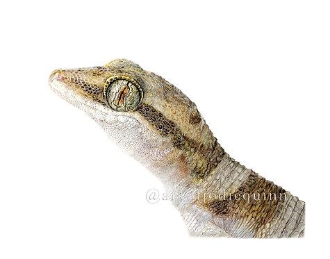 Desert Cave Gecko, Limited Edition Print