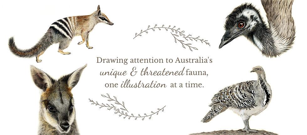 Jodie Quinn Wildlife Artist Banner.jpg