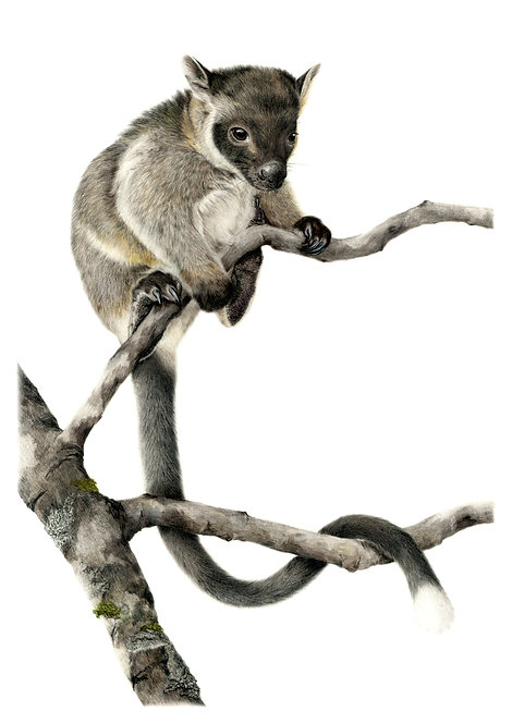 Lumholtz's Tree-Kangaroo Greeting Card