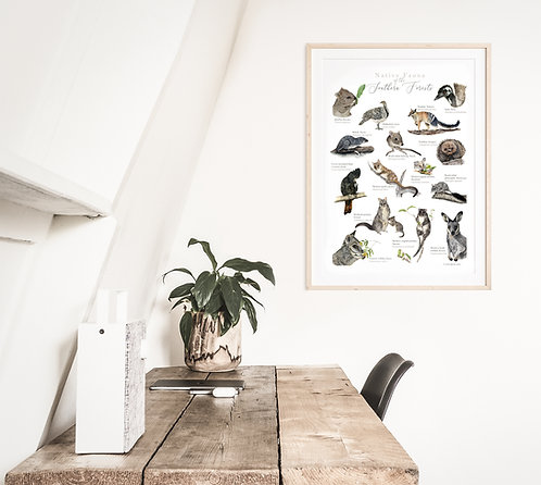 Native Fauna of the Southern Forests Poster