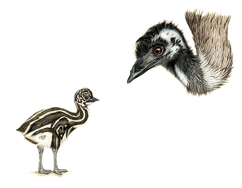 Emu with Chick Greeting Card