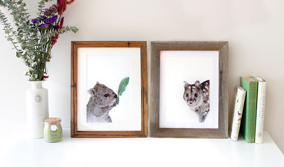 Nature inspired home decor design, feauring Jodie Quinn wildlife art, Quokka & Chuditch