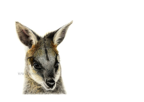 Swamp Wallaby, Limited Edition Print