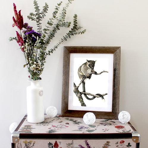 Lumholtz Tree-Kangaroo, Original Artwork