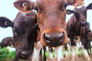 healthy, happy cows gove great milk