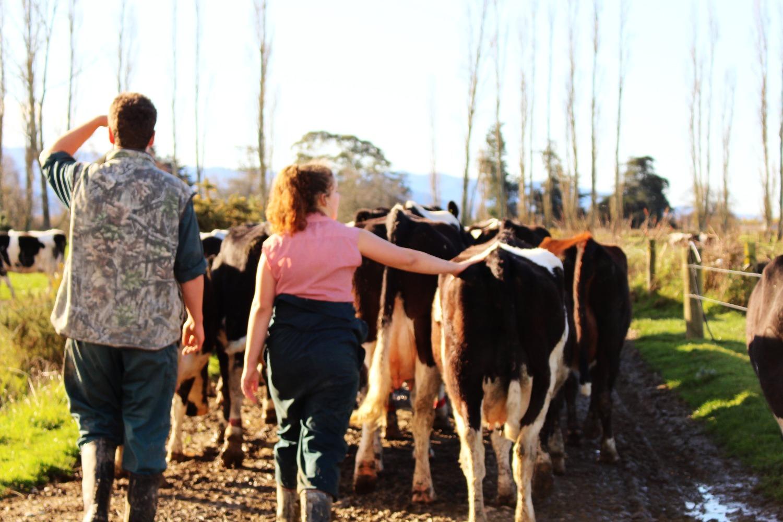 Dairy Farming, 2015