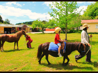 Last Pony Rides this Sunday (25.9.16)