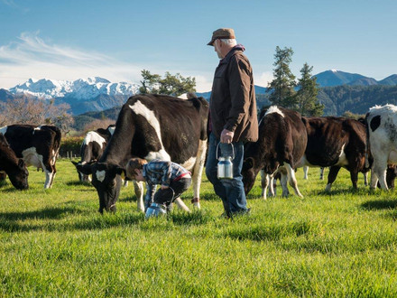 Sustainable Dairy Farming