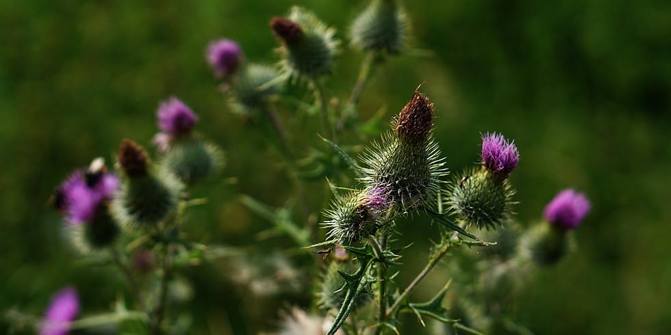 Plant Food Medicine