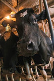 provider of fresh farm milk to the Nelson region:)