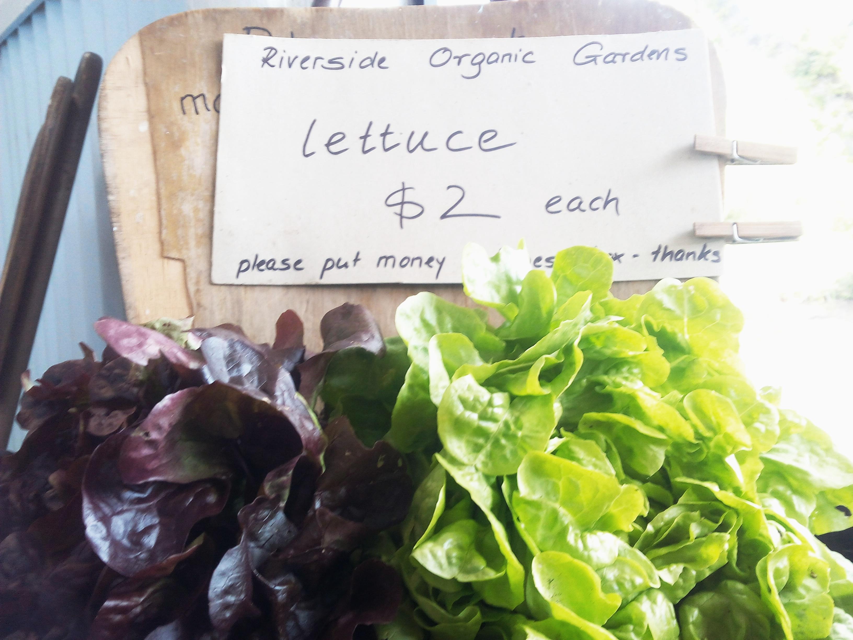 Fresh Organic Produce 4 Sale