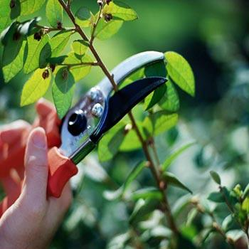 Tree Pruning & Plant Knowdledge