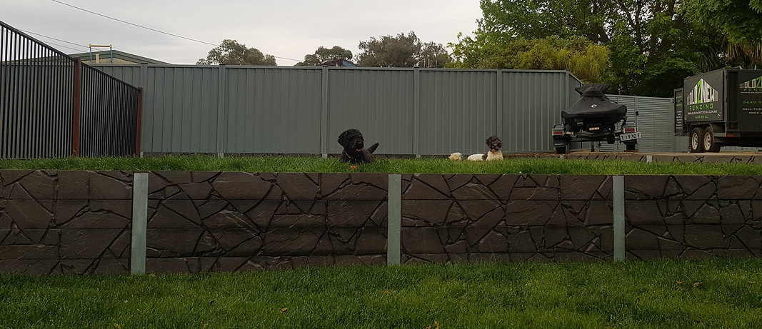 colorbond fencing dogs canberra