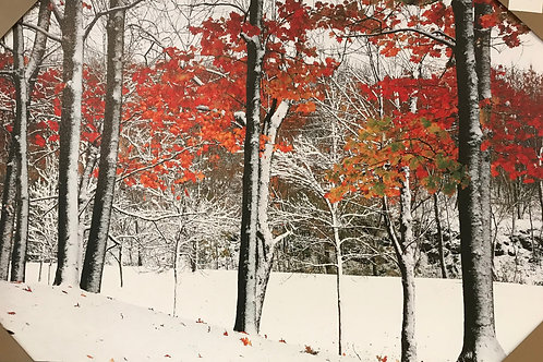 "Autumn Snow  45""x30"""