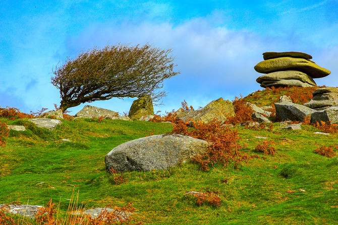 Cheesewring and weathered tree, Bodmin Moor