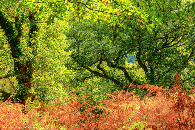 Teign Gorge colors, Dartmoor