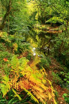 Dartmoor's River Teign