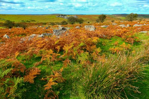 Bracket on Bodmin Moor