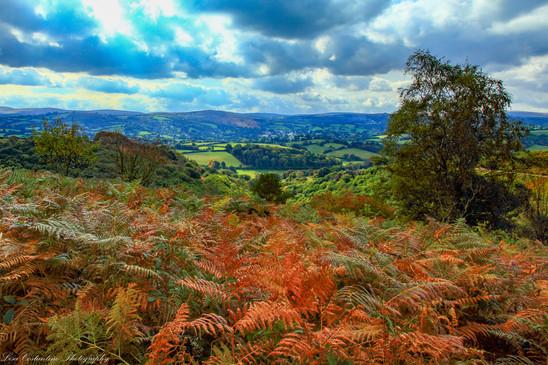 Teign Valley and beyond, Dartmoor