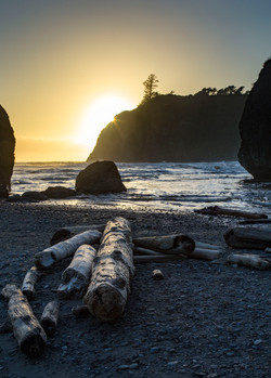 Ruby Beach driftwood sunstar