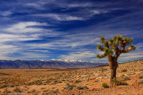 6 Joshua Tree-eye view of the Sierras_.j
