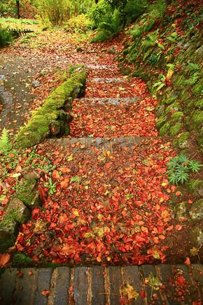 St Ann's Well steps, Malvern Hills