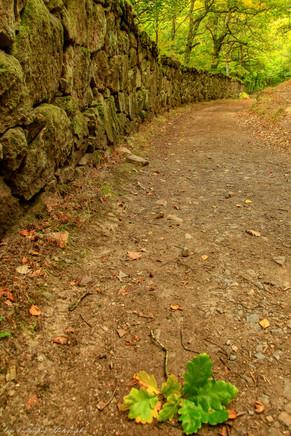 Oak leaves on path, Teign Gorge, Dartmoor