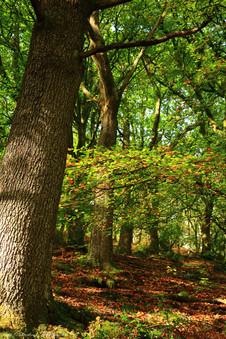Teign Gorge woodlands, Dartmoor