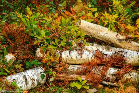 Still life with cut wood, Dartmoor