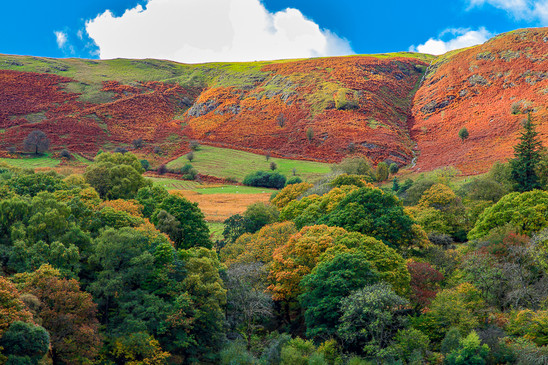 Bracken-painted hillside, Elan Valley, Wales