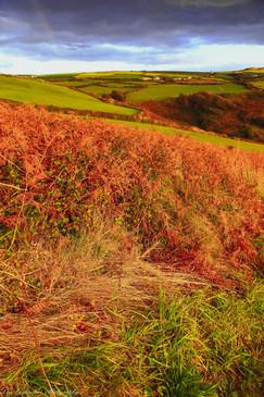 Bracken field and rainbow, Tintagel.jpg