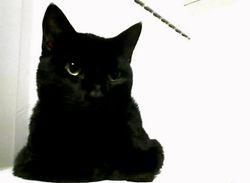 reine; contemplative