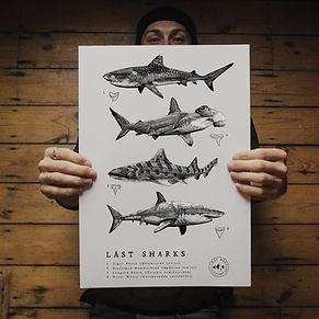 Lást Sharks with Tom