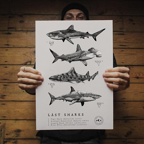 Lást Sharks