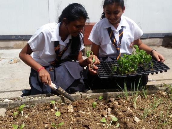 Landscaping & Ornamental _ Grow Box