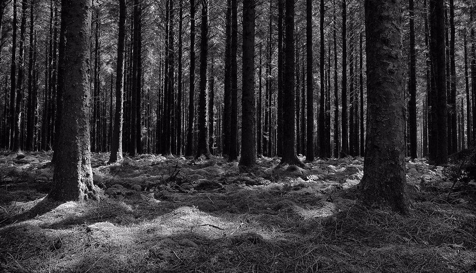 Dartmoor%2520forest%2520Nick%2520Fallowf