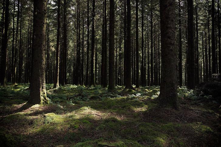Dartmoor forest.jpg