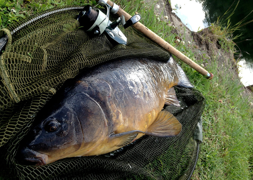 © Nick Fallowfield-Cooper River Lea carp