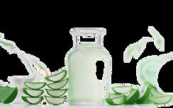 Aloe vera-13-Transparent.PNG