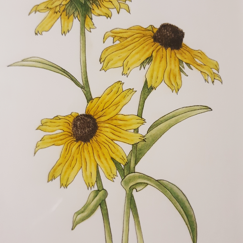 Wild About Wildflowers with Ellen Duarte on Zoom, May 19 - June 23, 1 pm - 3:30 pm