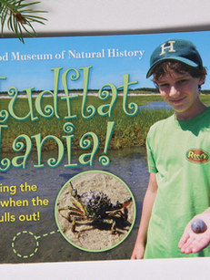 Mudflat Mania, Cape Cod Museum of Natural History