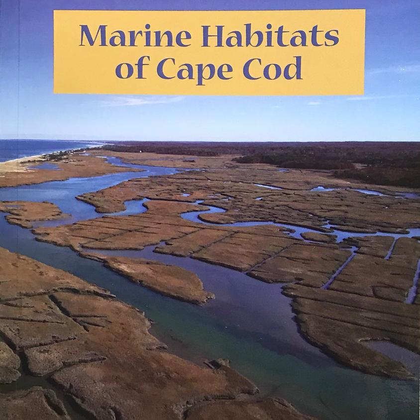 Virtual Talk: The Ecology of a Cape Cod Salt Marsh