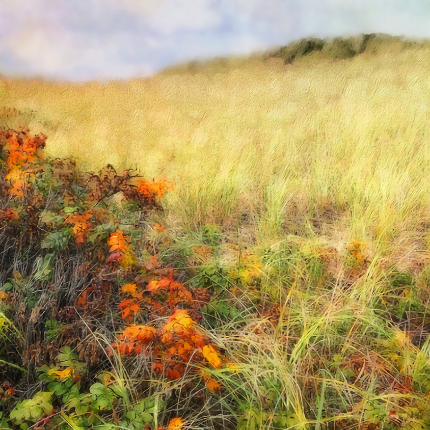 Intro to the Art of iPhoneography with Rebecca Bruyn on Zoom