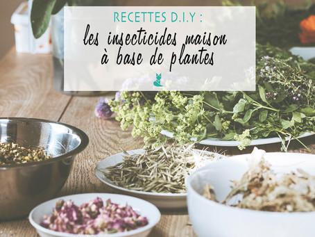 Recettes D.I.Y : Les insecticides maison, à base de plantes.